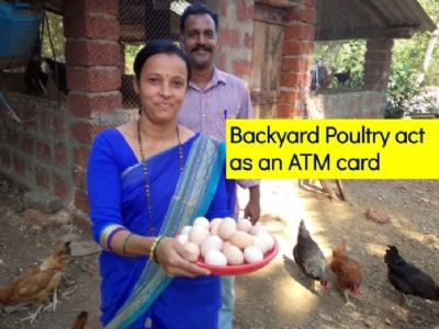 Backyard Poultry acts as an ATM card for rural women!
