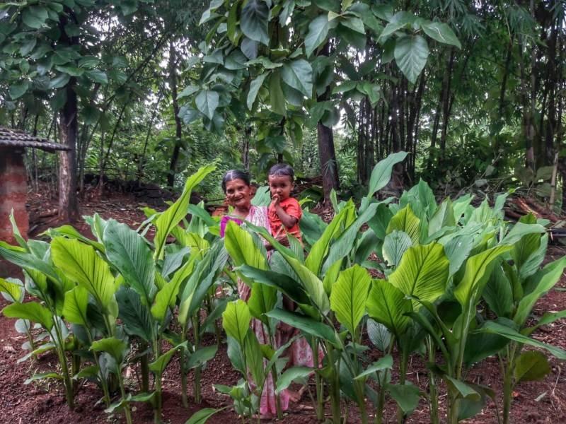 Turmeric Plantation 4_1&n