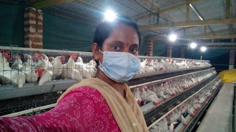 Layer Poultry 2_1&n