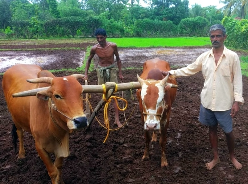 Agriculture Activity 1_1&