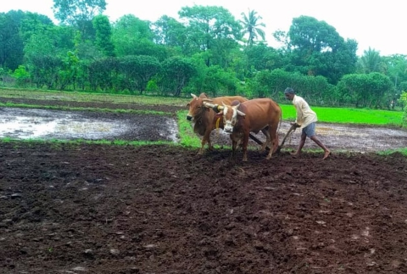 Agriculture Activity 2_1&